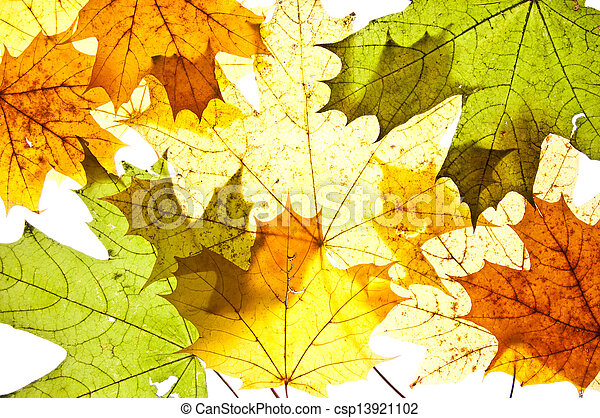 autumn maple leaves - csp13921102
