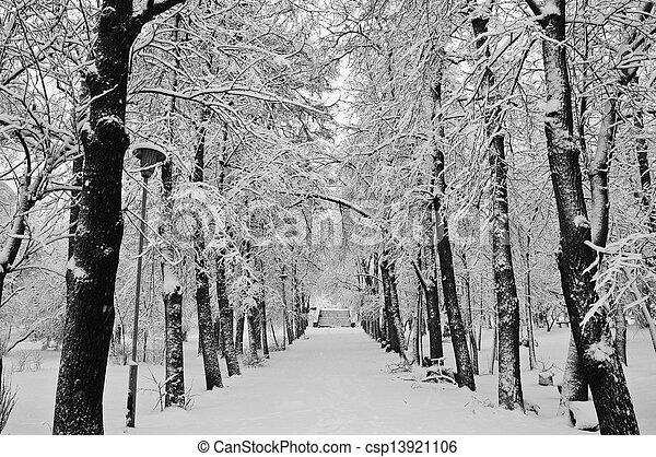 snowfall in the park - csp13921106