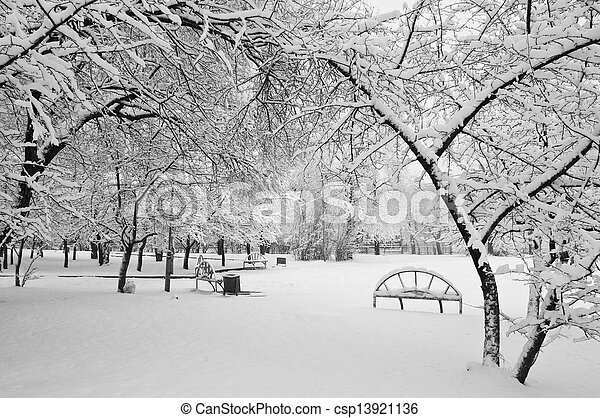 snowfall in the park - csp13921136