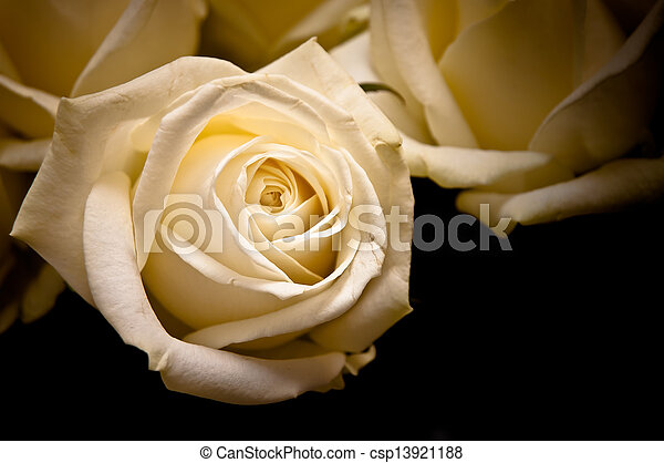 white roses on black background in old style - csp13921188