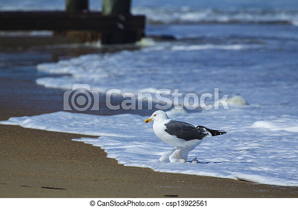 Sea Bird in Sea Foam - csp13922561