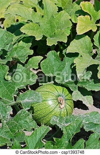 Green Pumpkin - csp1393748