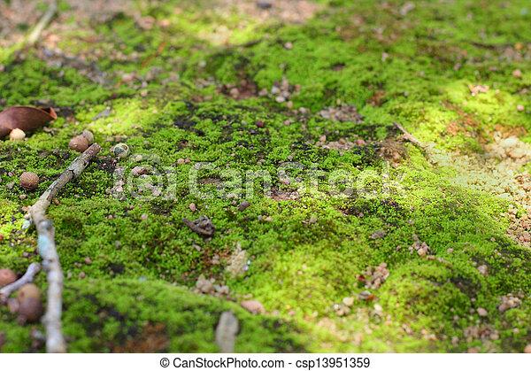 Images de vert lichen mousse arbre nature csp13951359 - Mousse sur les arbres ...