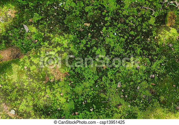 Photo de vert lichen arbre mousse nature vert - Mousse sur les arbres ...