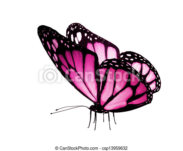 Drawings of Pink butterfly , isolated on white csp13959632 ...