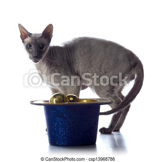 Orientalisk katt