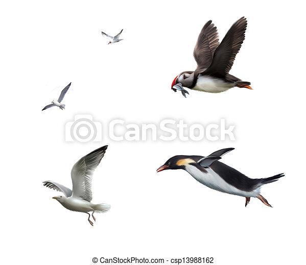 Flying birds: seagull, puffinn, penguin - csp13988162