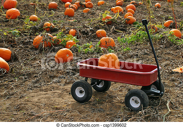 Pumpkin patch - csp1399602