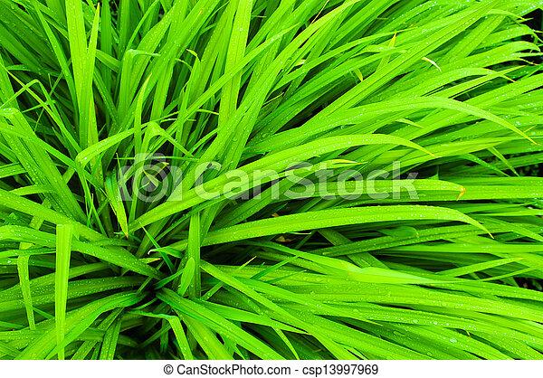 fresh green grass - csp13997969