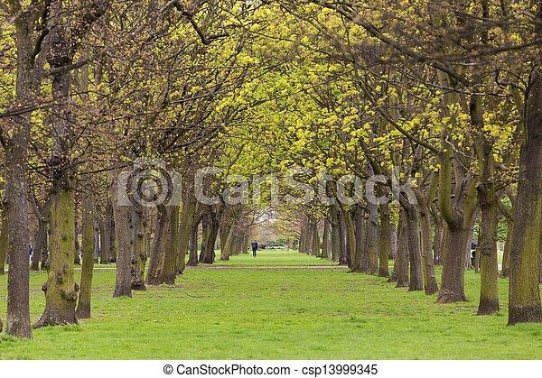 Tree park alley - csp13999345