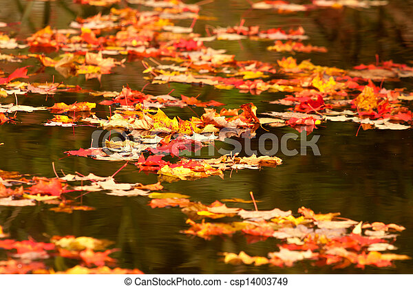 fall leaves on pond - csp14003749