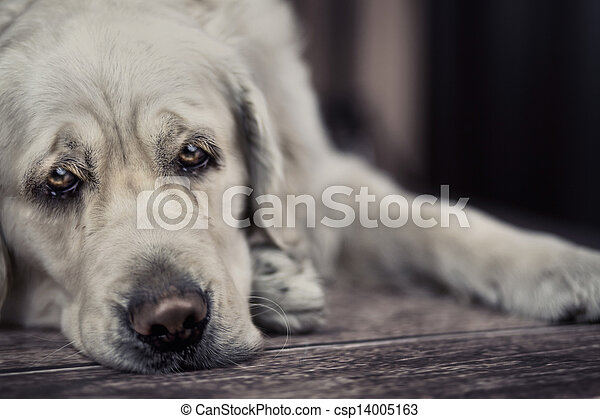 Sad dog waiting for master - csp14005163