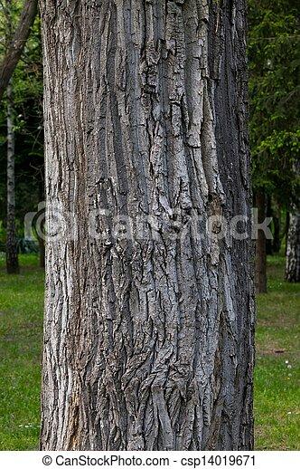 Im genes de rbol tronco grueso rbol tronco primer - Tronco de arbol para decoracion ...
