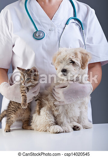 Animal doctor closeup with pets - csp14020545