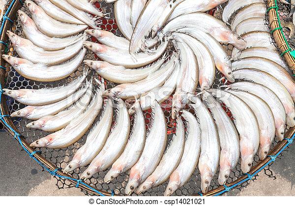 photo de sec gourami fish cercle bambou plaque csp14021021 recherchez des photographies. Black Bedroom Furniture Sets. Home Design Ideas