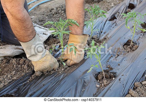 Agriculture - csp14037911