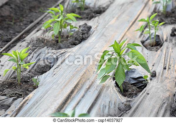 Agriculture - csp14037927