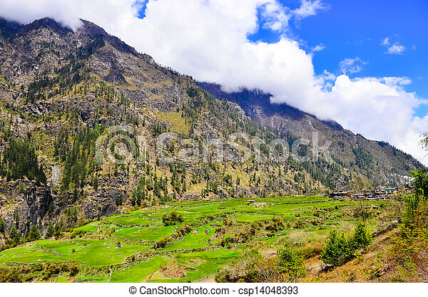 Mountain barley and rice fields and rural village - csp14048393