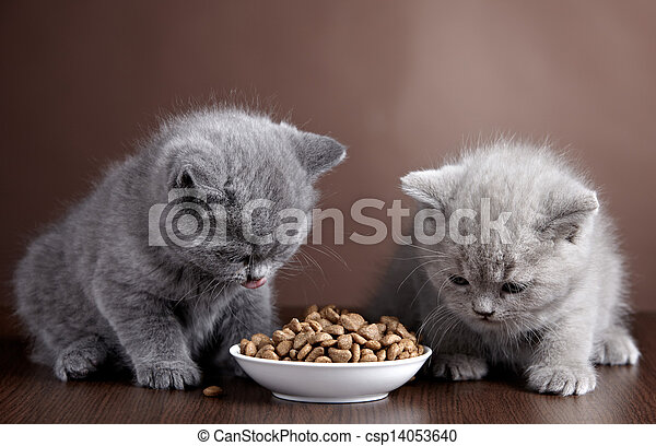 Bowl of cat food and two kittens - csp14053640