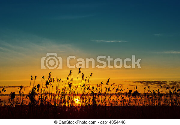 sunset over river with canes - csp14054446