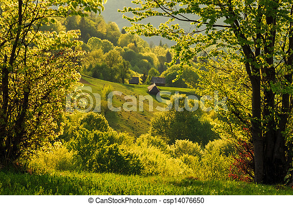 Spring gold evening landscape in the Carpathian mountains - csp14076650
