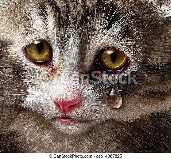 濫用, 動物 - csp14087825