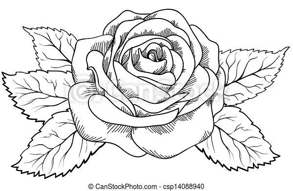 Vecteur eps de beau style rose noir blanc gravure - Coloriage d une rose ...