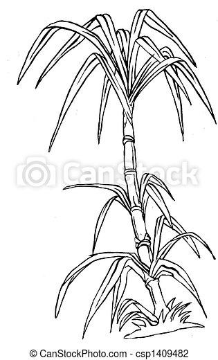 clip art of sugar cane csp1409482 search clipart sugar cane clip art outline sugarcane plant clipart