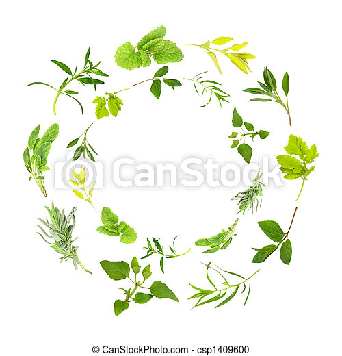 Herb Leaf Garlands - csp1409600
