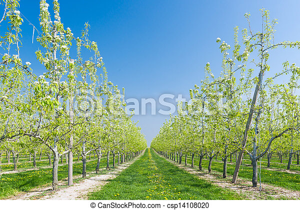 Fruit Orchard - csp14108020