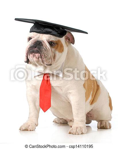 pet graduation - csp14110195