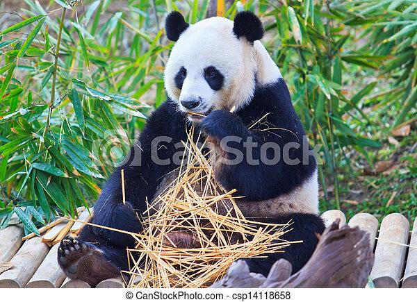 panda - csp14118658