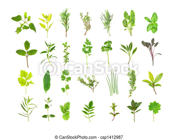 Large Herb Leaf Selection - csp1412987
