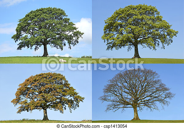 Oak Tree Four Seasons - csp1413054