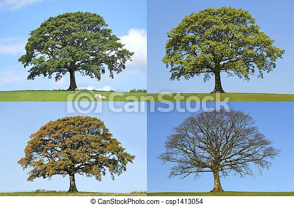 Oak Tree Four Seasons - csp1413054
