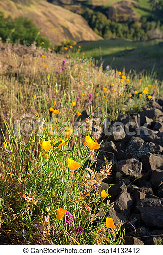 Spring Wildflowers in Rural California - csp14132412