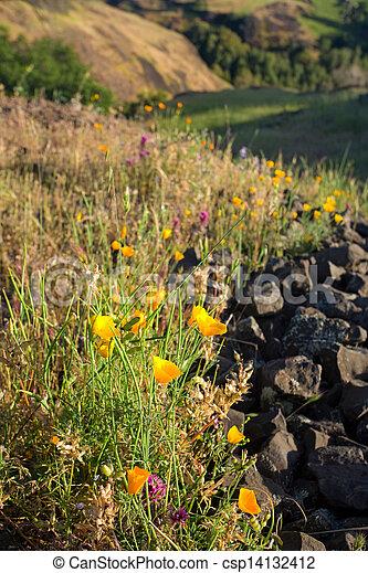 Spring Wildflowers in Rural California - csp14132412
