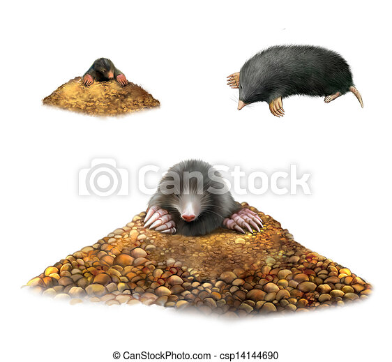 animal Mole in molehill showing claws.  Isolated Illustration on white background. - csp14144690