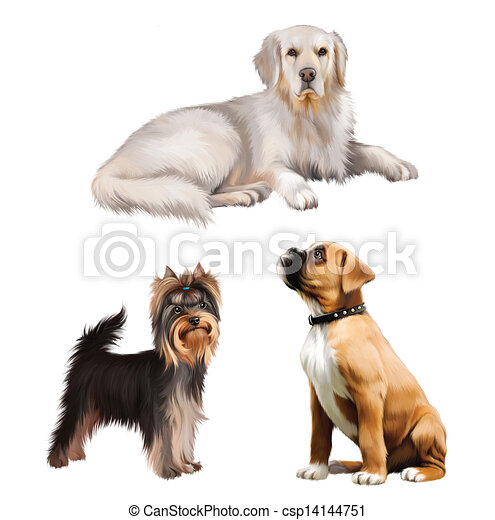 Yorkie Illustrations and Clipart. 88 Yorkie royalty free ...