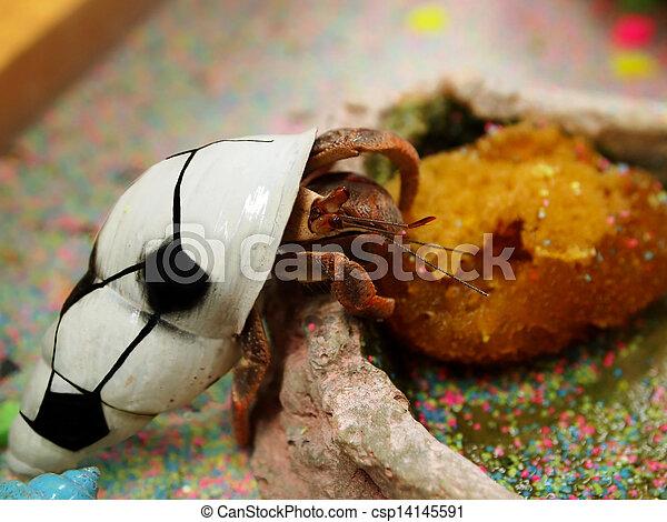 Hermit Crab Pet