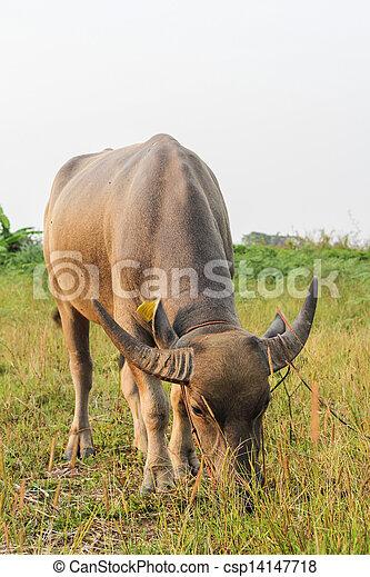 Mammal animal - csp14147718