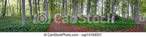 aspen trees in park - csp14164031