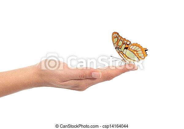 Beautiful butterfly on a woman hand - csp14164044