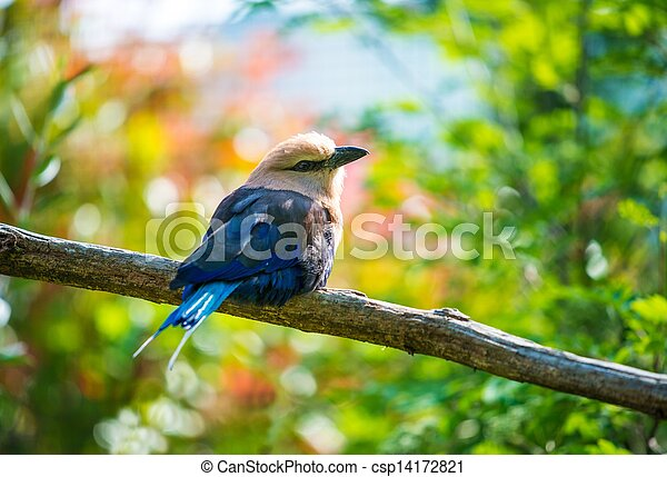 Beautiful little bird sitting on a tree branch - csp14172821