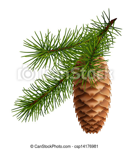 Vector of Pine cone with branch csp14176981 - Search Clip ...