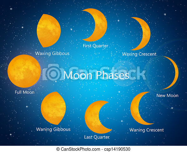 Drawings of Moon phases - illustration of moon phases csp14190530 ...