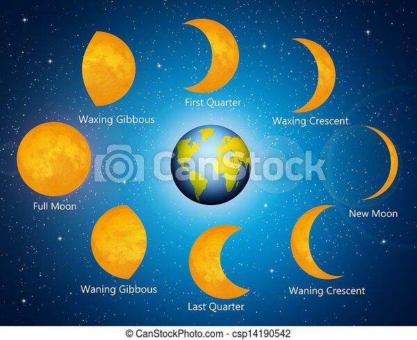 Drawing of Moon phases - illustration of moon phases csp14190542 ...
