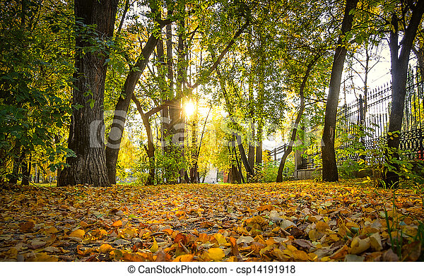autumn park - csp14191918