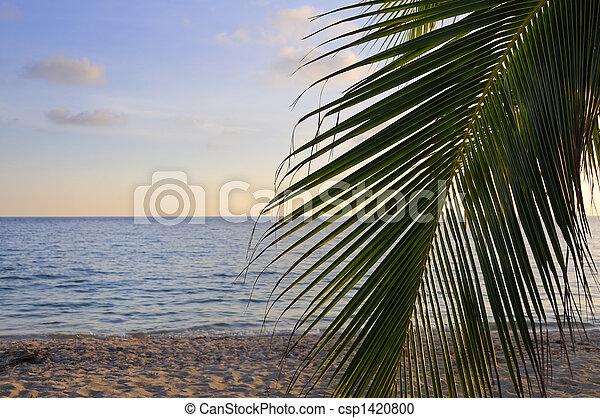 Tropical beach at sunset - csp1420800