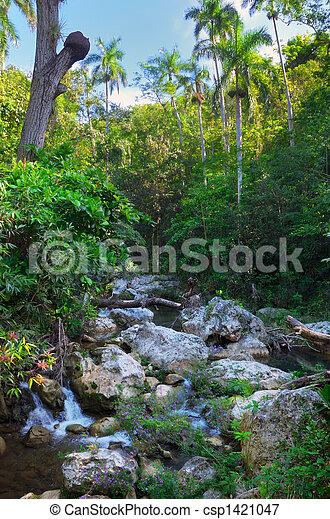 Cuban lanscape with rapids - csp1421047